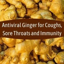 Antiviral Ginger for Coughs, Sore Throats and Immunity