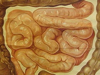 Best time to take digestive enzymes